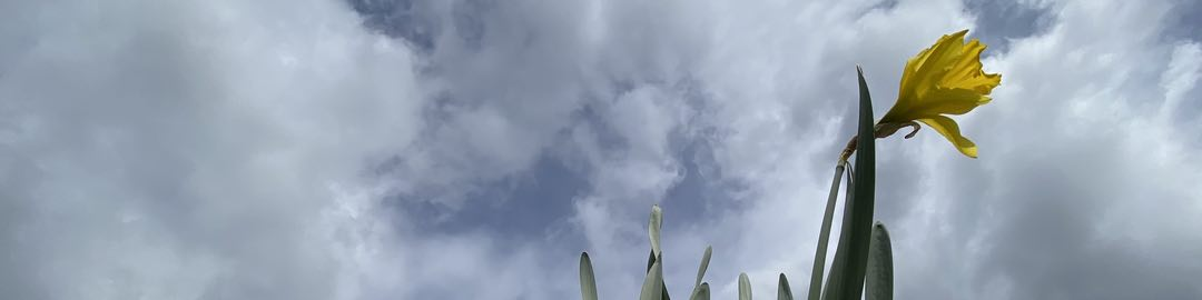 Photo of a yellow flower against a partly cloudy sky