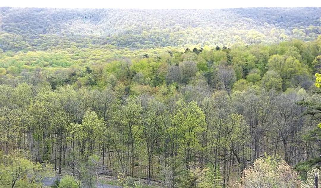 Aerial Photo of rolling hills covered with trees