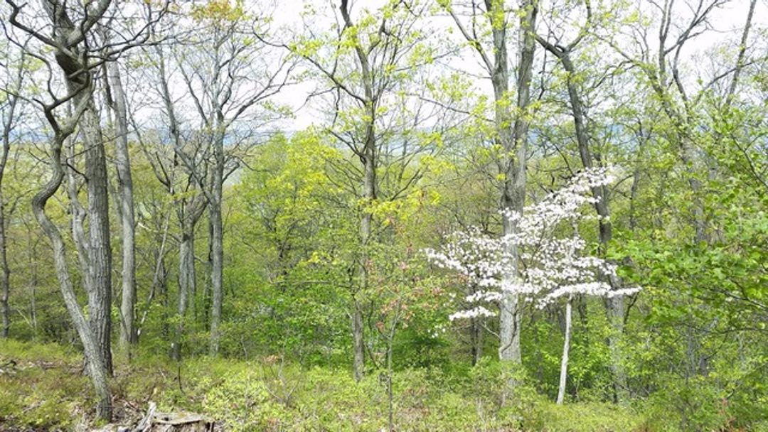 Photo of a mixed forest