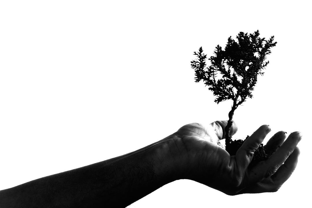 Black-and-white photo of a hand holding a small tree, silhouetted against a white background.