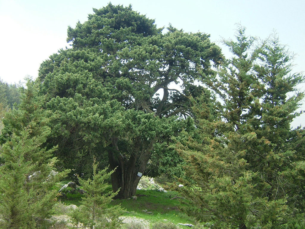 Photo of cypress tree in the background