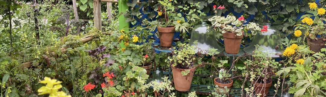 Photo of a group of potted plants in a garden