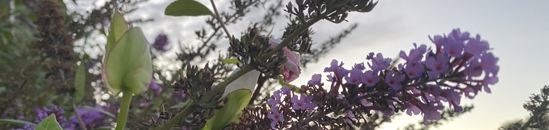 Photo of stalks of flowers against a gray sky